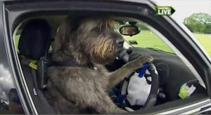 dog-driver2
